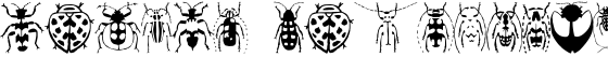 Stan's Callices's Beetles