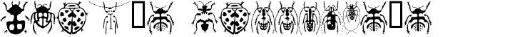 Stan's Callices's Beetles